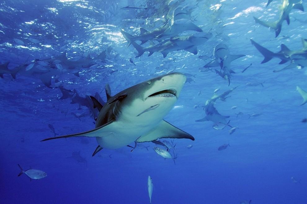 акулы виды акул фото интерьера кабинета для