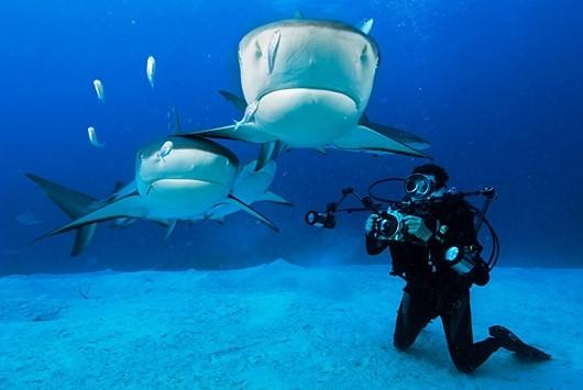 А вы бы хотели поплавать с этими рыбками? ;)
