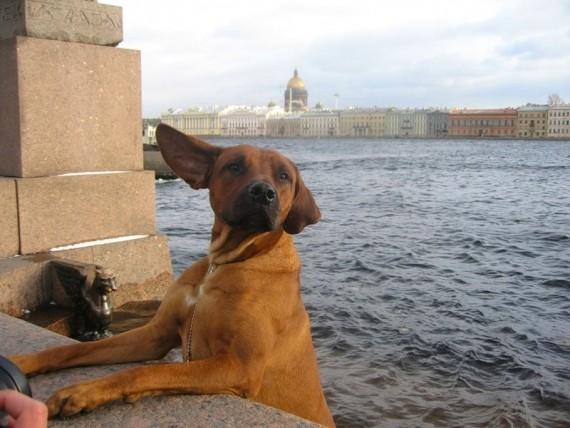 Петербург, Нева, пес..))