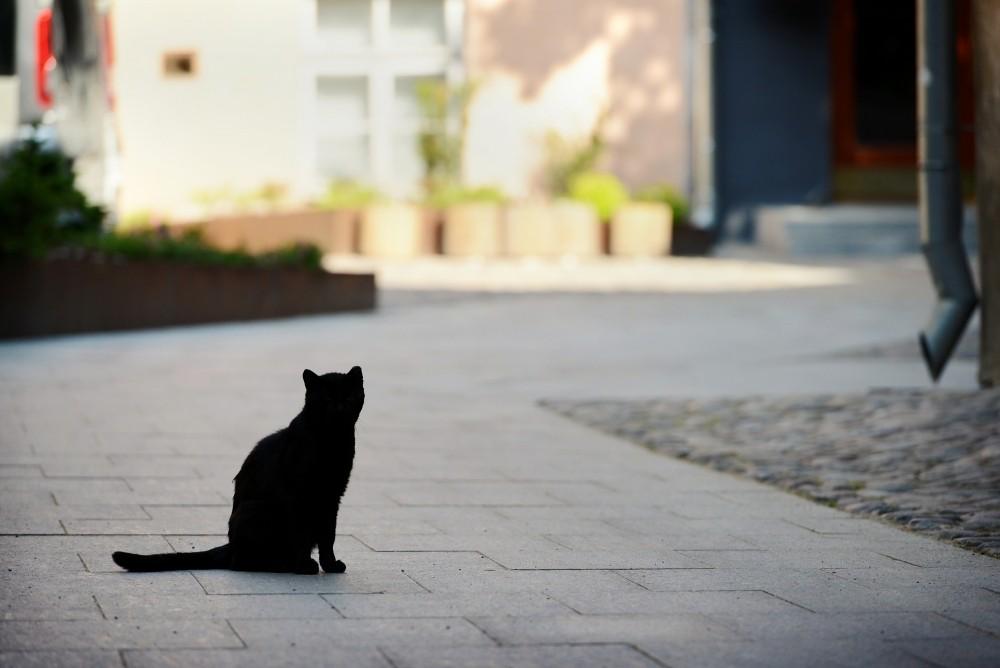коты Таллина