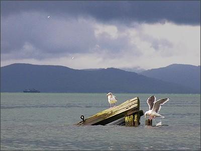 море, домик, чайка