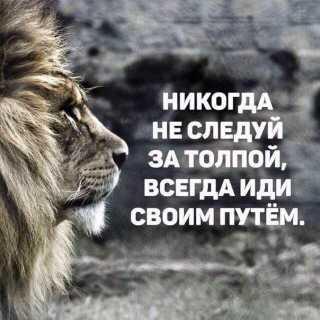 NamigMammadov avatar
