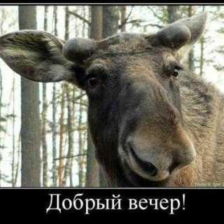 NikolayNikolay avatar