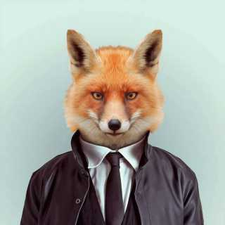 FoxAlbertovich avatar