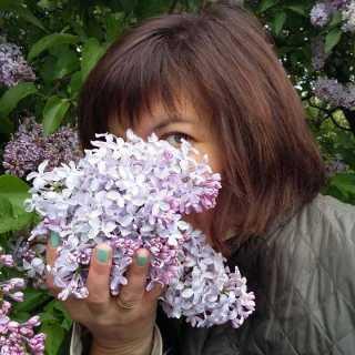 ZorinaSaremo avatar