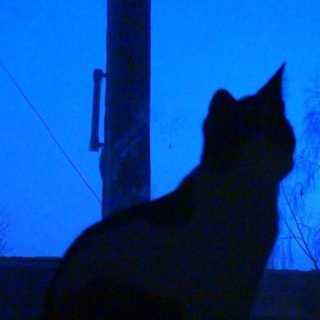 CatBoss avatar