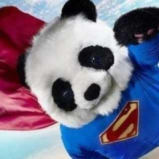 pandapavel avatar