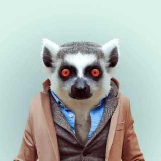 AntonShved avatar