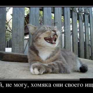 EvgenyReusov avatar