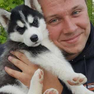 AleksandrLukashkin avatar