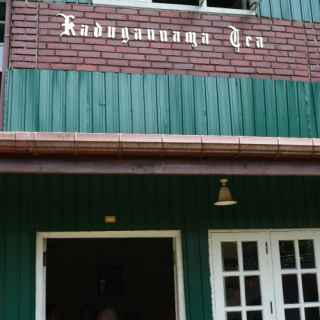 Чайная фабрика в Кадаганнаве
