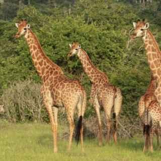 Quissama national park