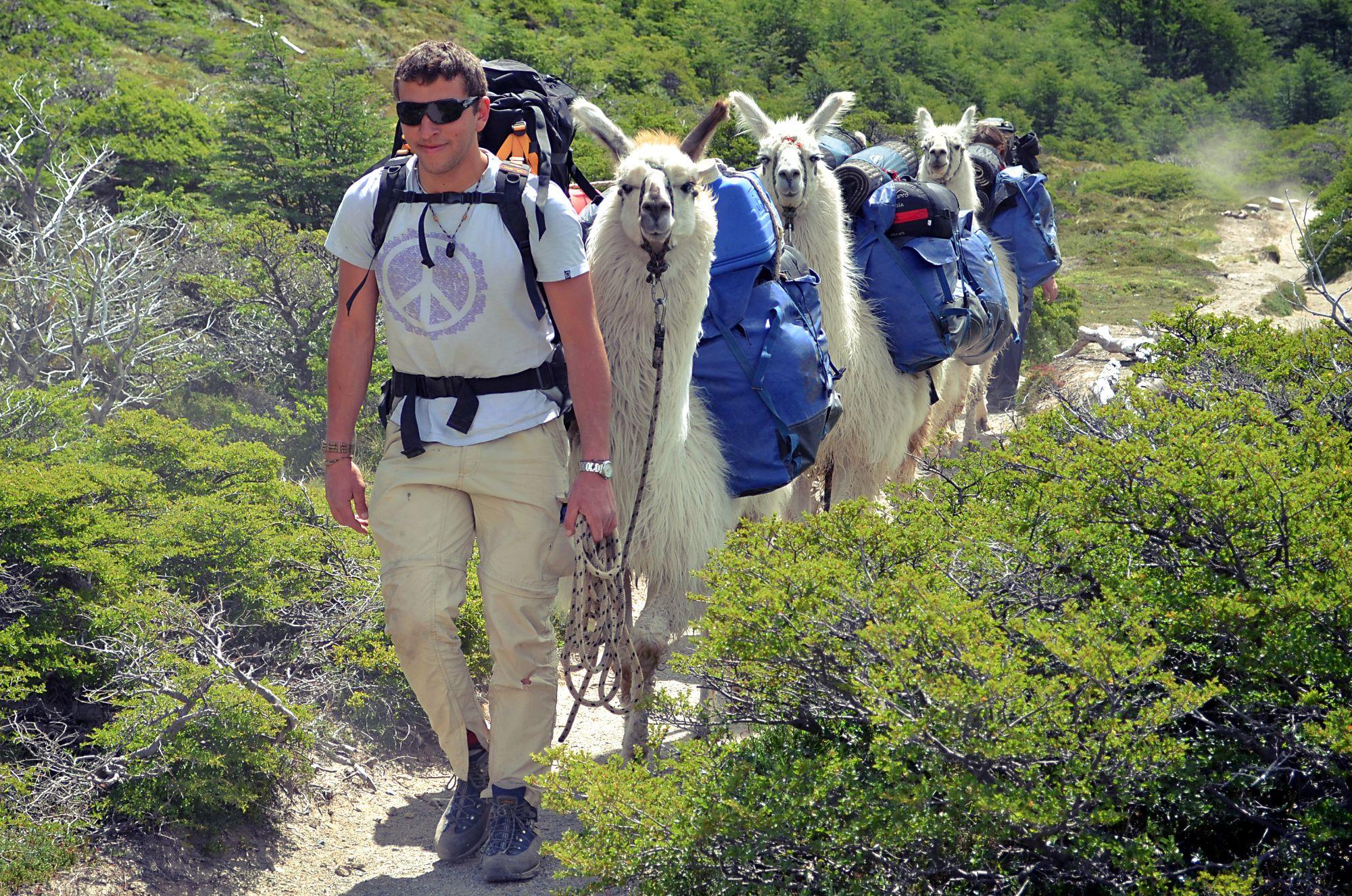 Самые яркие обитатели юга Аргентины — ламы!