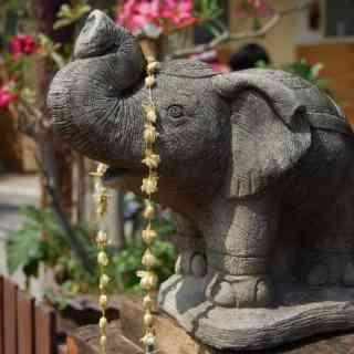 Любимый слоник из одного из храмов Чианг Мая.
