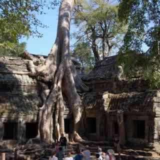 Храм Та Пром с деревьями-великанами.