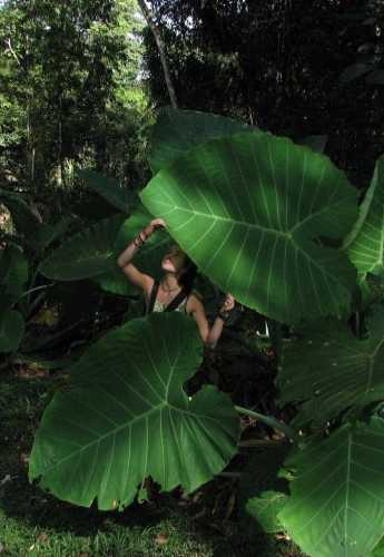 Гигантские растения в национальном парке Таман Негара и маленькая я.