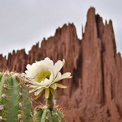 Цветущий кактус на фоне удивительных скал недалеко от городка Тупица в Боливии.