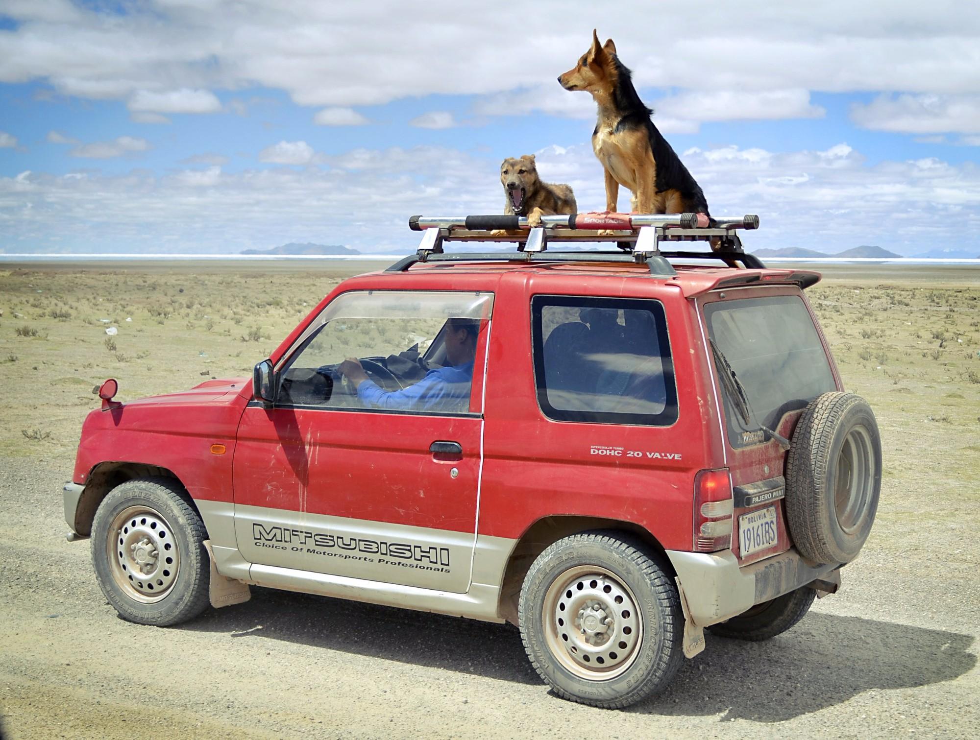 Счастливые псы недалеко от боливийского городка Уюни.