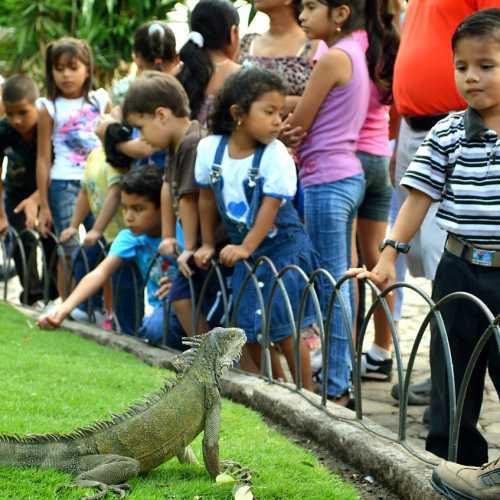 Детишки и зверюшки в парке Гуаякиля.