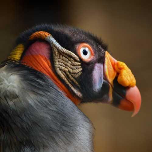 Удивительный птиц в зоопарке города Кали в Колумбии.
