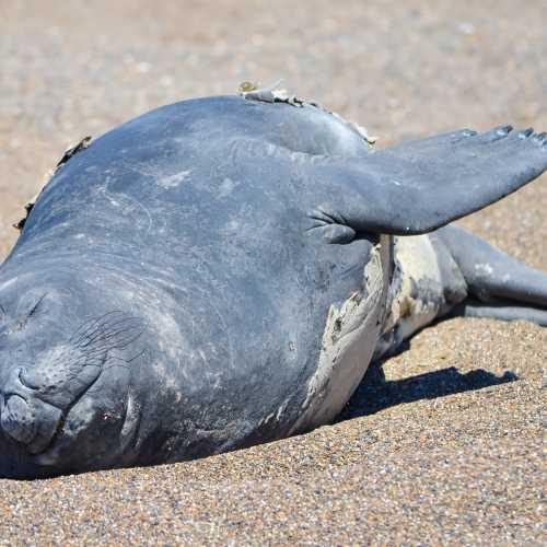 Морской слон мирно спит на солнышке в Патагонии.
