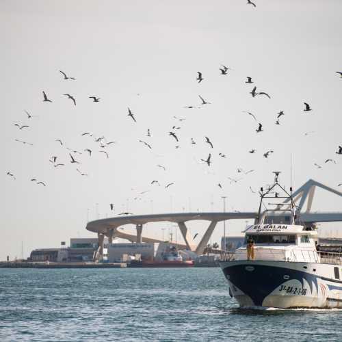 Барселонские корабли и чайки.