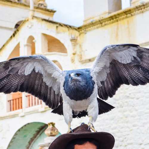Орел высматривает добычу недалеко от каньона Колка в Перу.