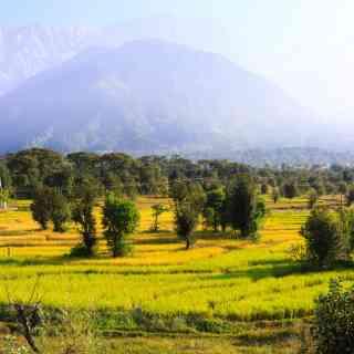 Viilage next to Dharamsala