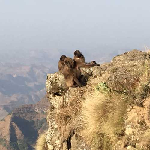 Ras Dashen, Ethiopia