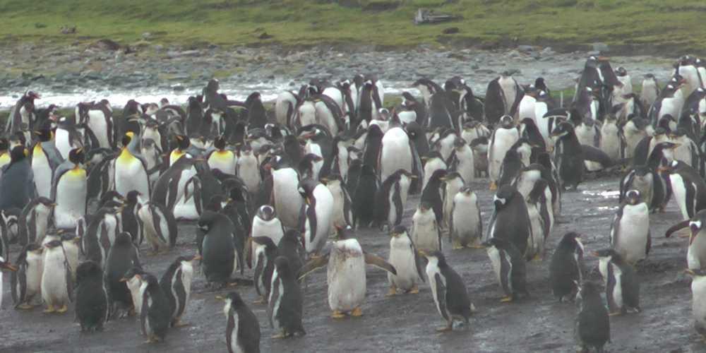 Фолклендские острова фото