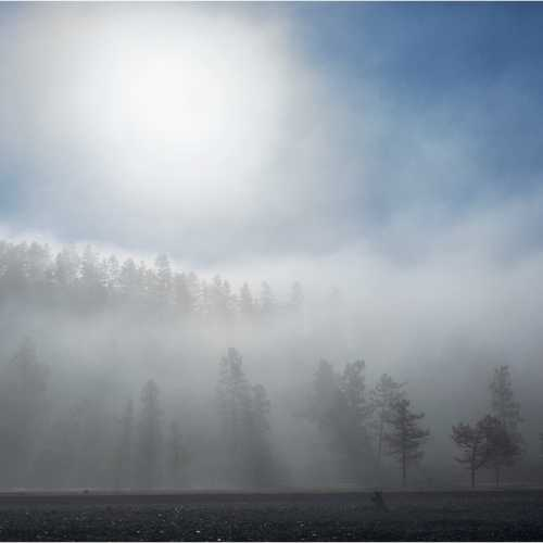 Лес в осеннем тумане