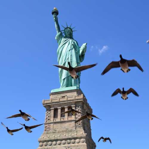 Канадские гуси летят в тёплые края))