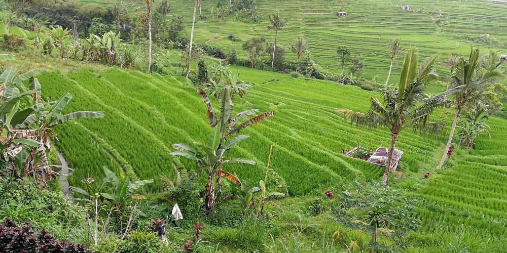Индонезия фото