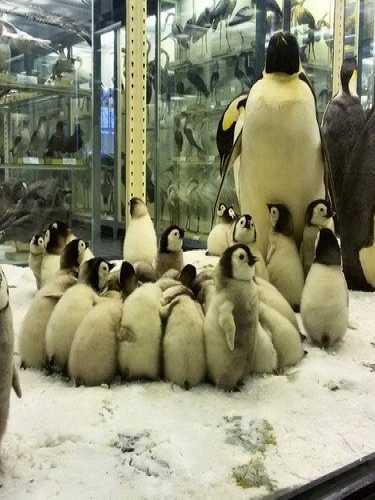 Zoological Museum Saint-Petersburg, Russia