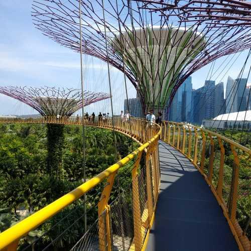 Фантастические супердеревья в «Саду у Залива» (Garden by the Bay) стали уже визитной карточкой Сингапура.