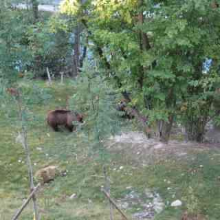 Берн Медвежья яма