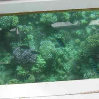 Из Шрам-эль-Шейха в красное море на катере с прозрачным дном