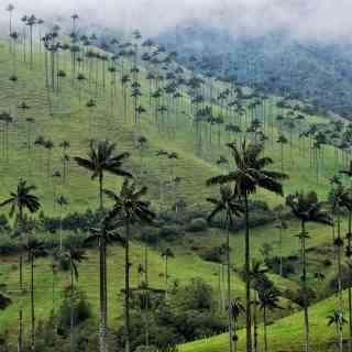 Долина Кокора, Колумбия<br/> После полуторачасов конной прогулки мы спешились и пошли наслаждаться ещё одним чудом природы — Долиной Кокора!