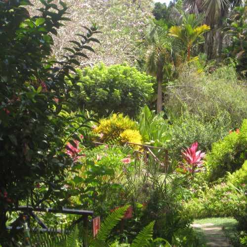 Ботанический сад Андромеда, Barbados
