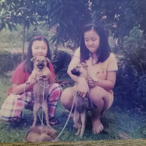 宠物, Малайзия