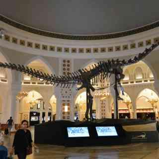 Скелет динозавра в Дубай Молле