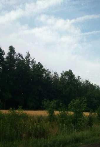 и постоянные посадки и леса