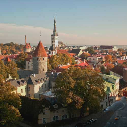 Tallinna vanalinn ja kajakas