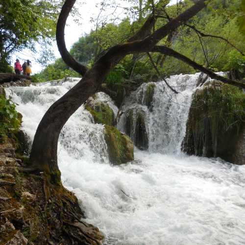 Тропа в заповеднике Плитвицкие озера то подходит к самой кромке воды, то поднимается в горы, откуда открывается вид на замечательный ландшафт.