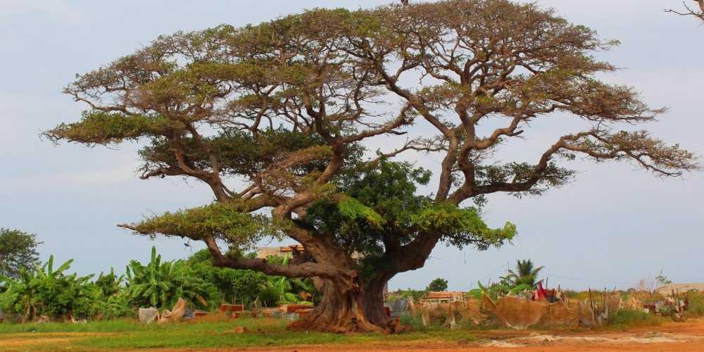 Гамбия фото