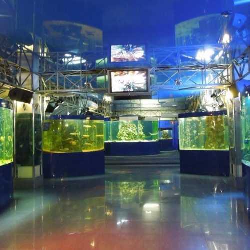 Геленджикский океанариум, Russia