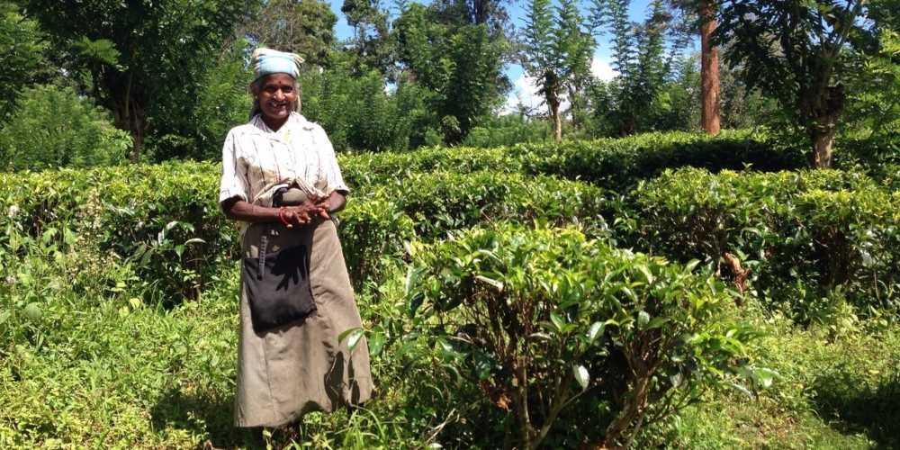Шри-Ланка фото
