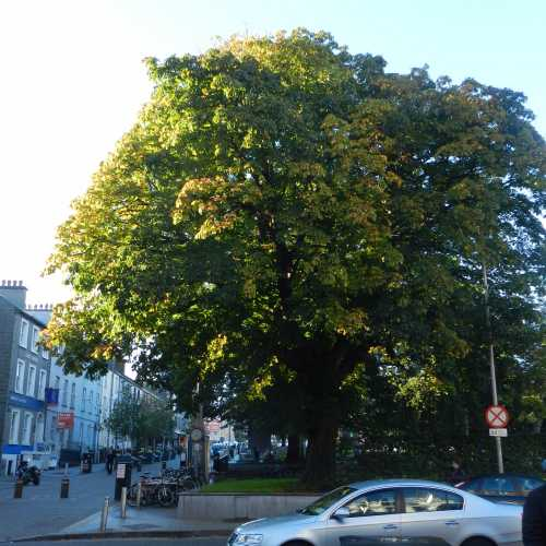 Центральный парк, одно из самый старых деревьев города.