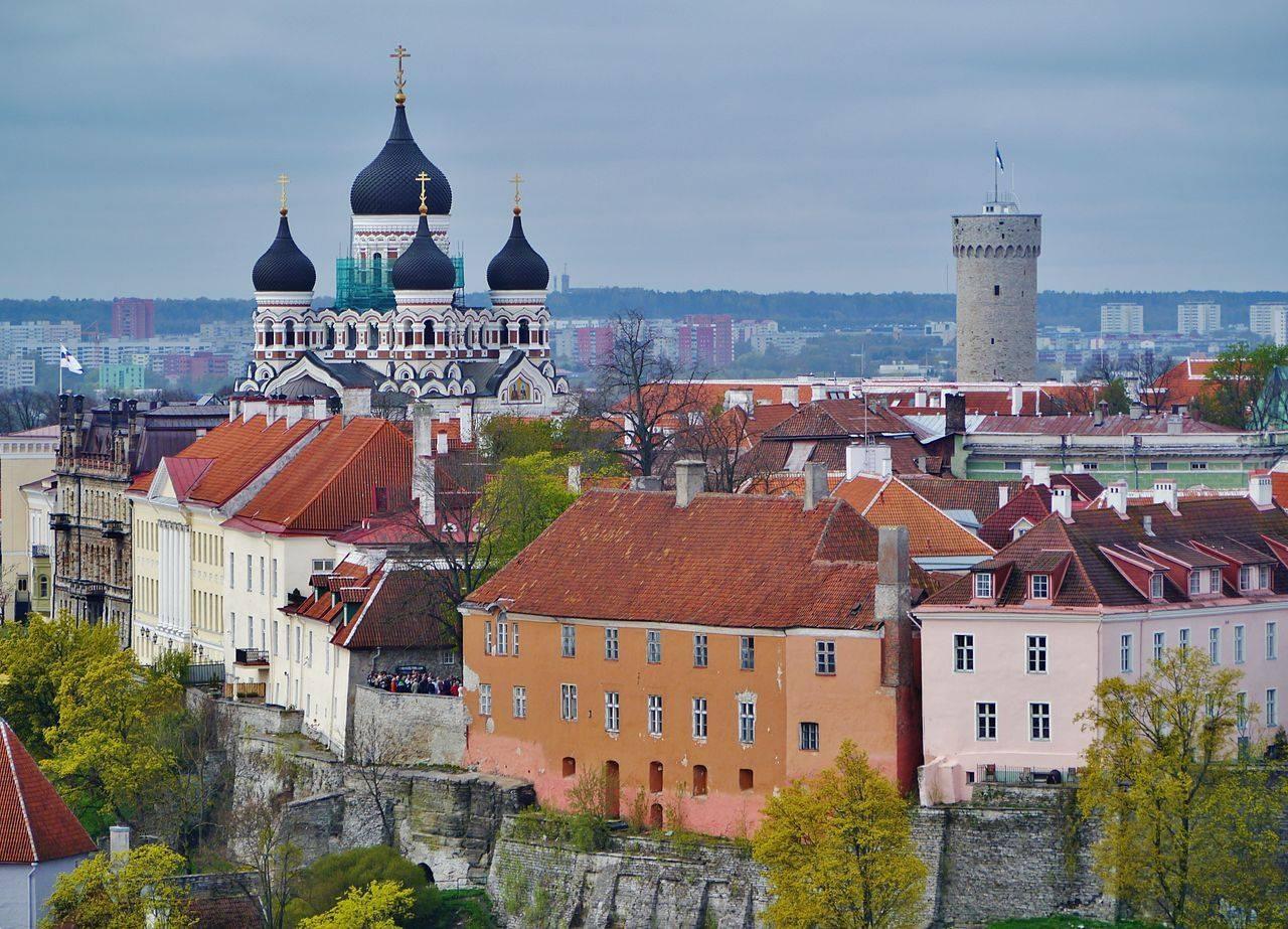 мама эстония сегодня фото сулугуни режем