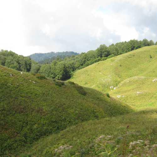 Альпийские луга.